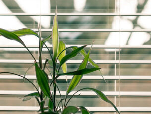 green-leaf-plant-against-white-venetian-window-blinds-845248
